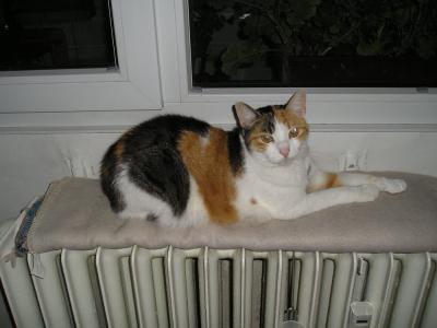 krásná kočička zblízka