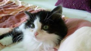 černá kočička fotogalerie velký péro v manželce