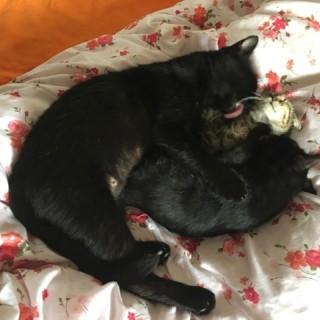 Černá kočička bití