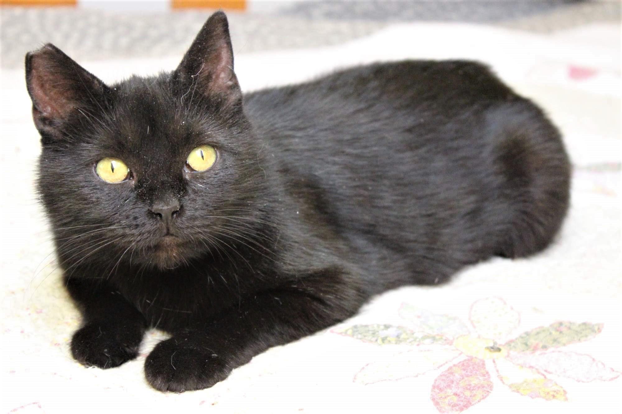 mladá hubená kočička fotky