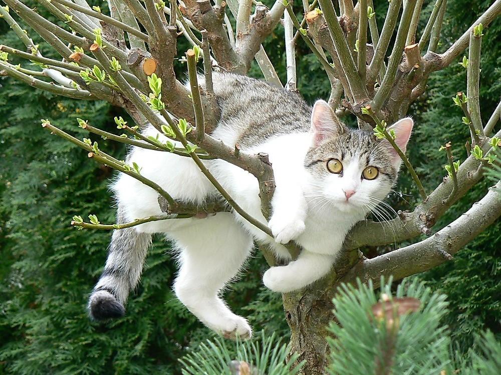 super těsná malá kočička