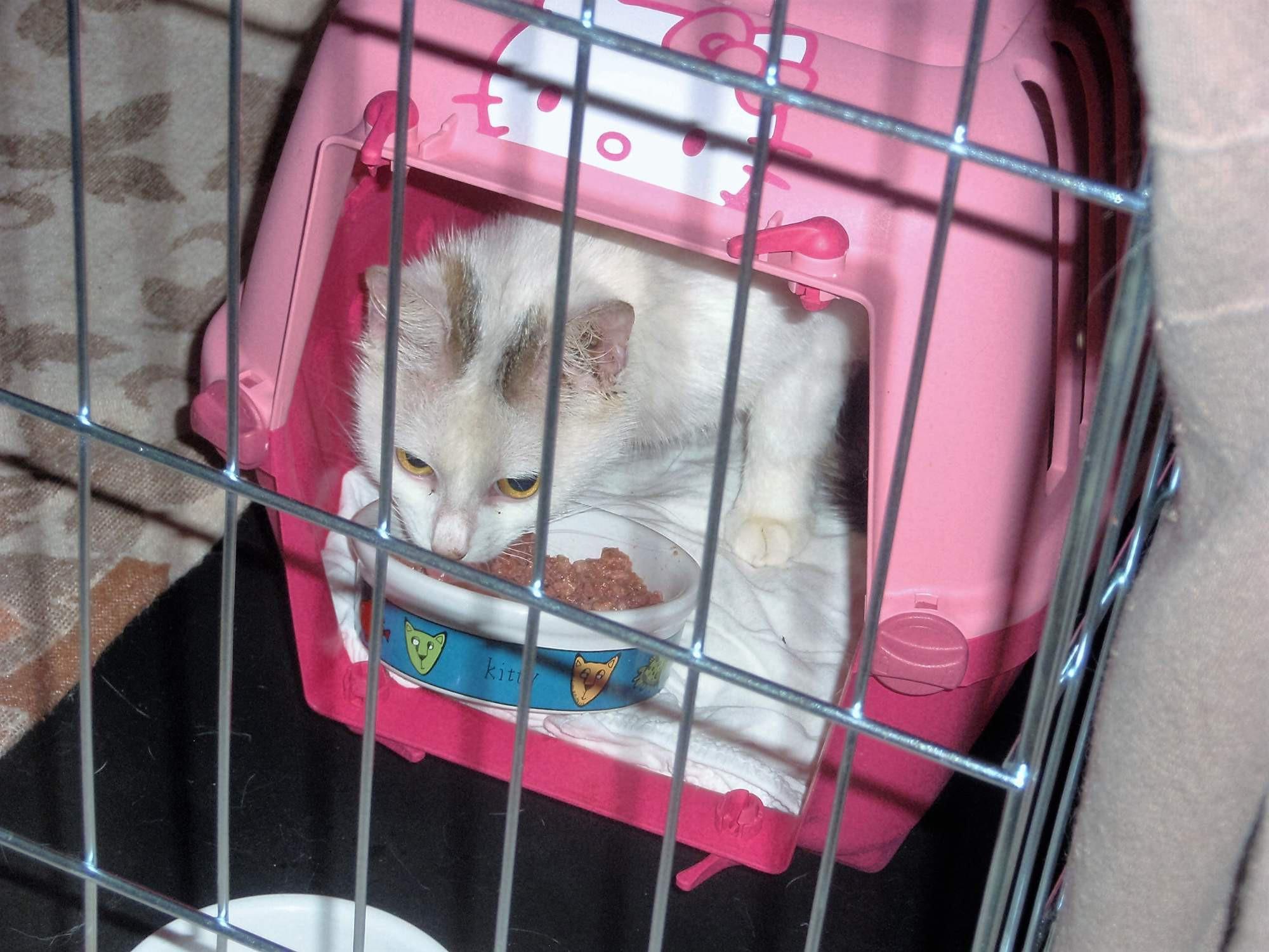 Fotky mladého kočička