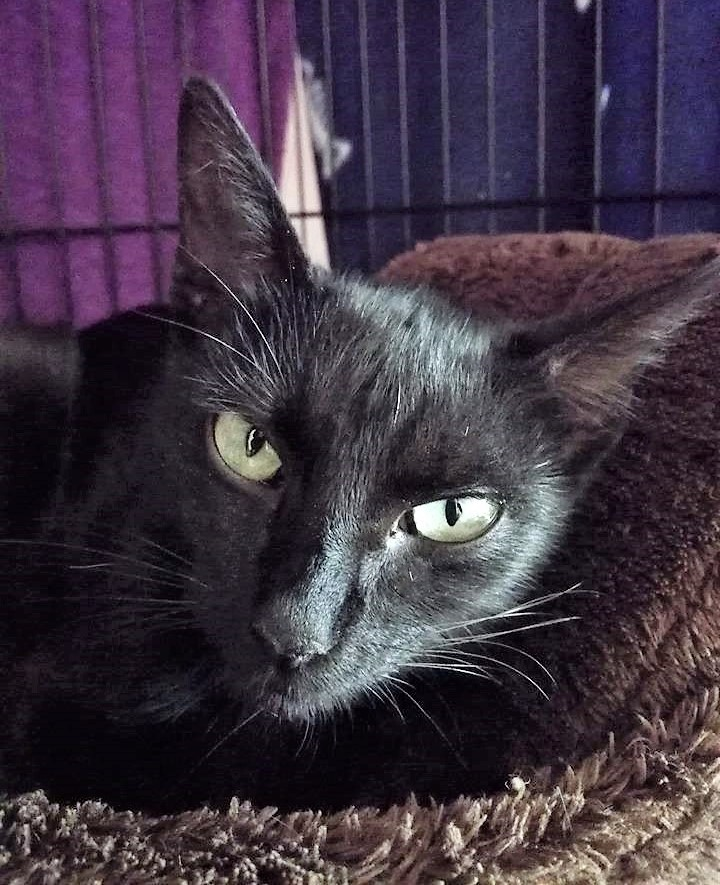 Kočička Poppy: Cvrček, Jak asi vypadá přátelství pejska, kočičky, králíčka, myšky, jezevce a sovy?
