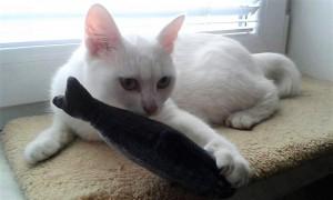 takže její černá kočička stříkat