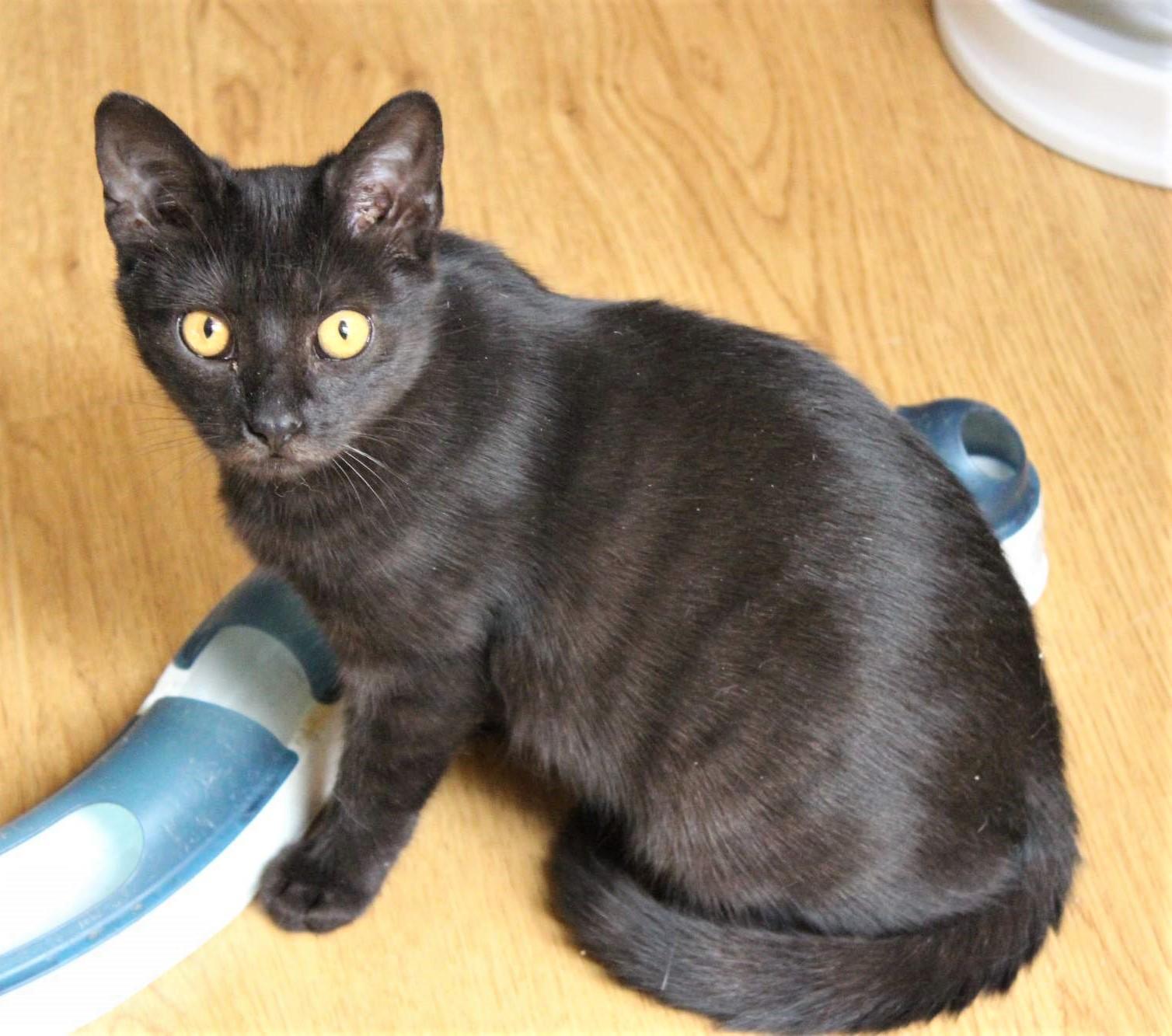 Hubená černá babička kočička