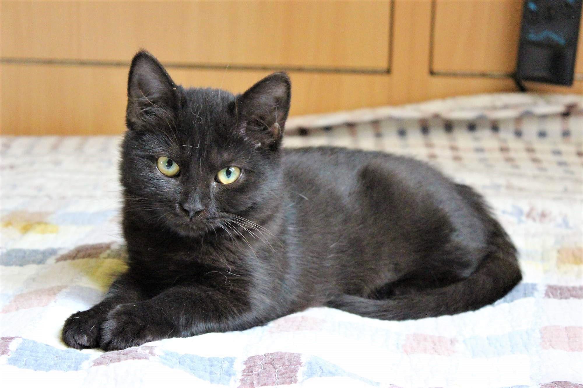 pěkně černá kočička video