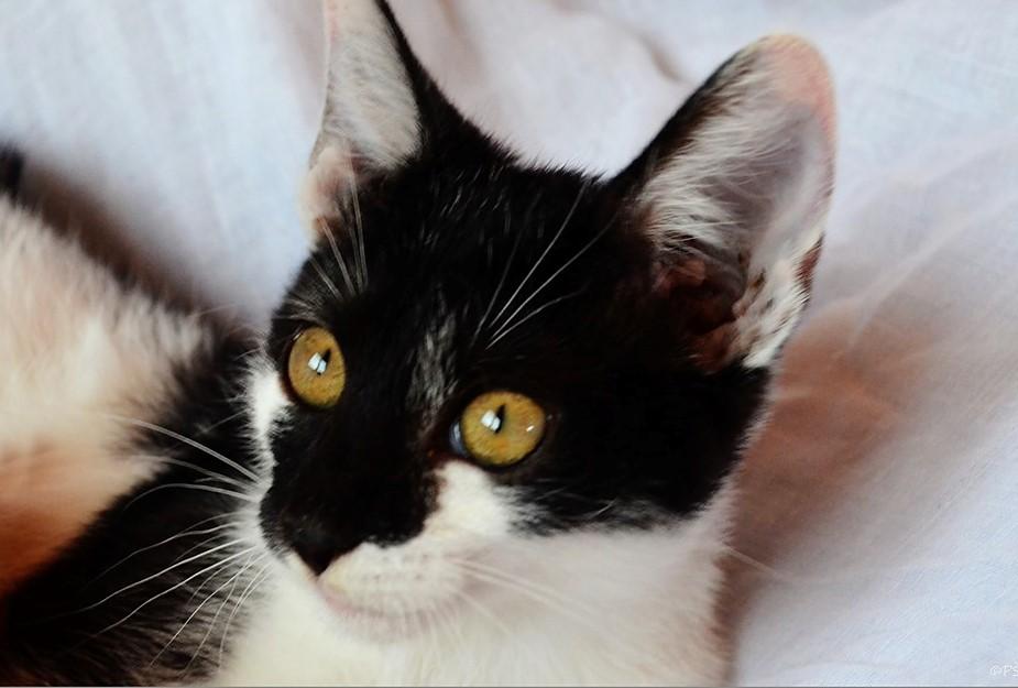 obrovský černý kočička obrázek černý anální sex film