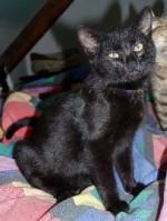Černá kočička v práci